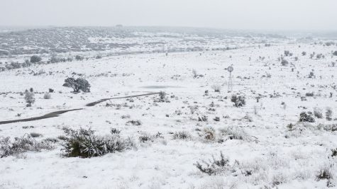 Texas storm fills the land with snow and ice. (Jonathan Cutrer)
