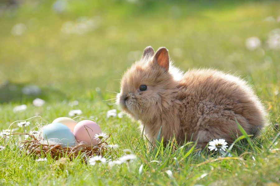 Egg-cited for Easter? Here's what you need to know about Easter!